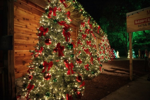 Lowry Park Zoo's Christmas in the Wild