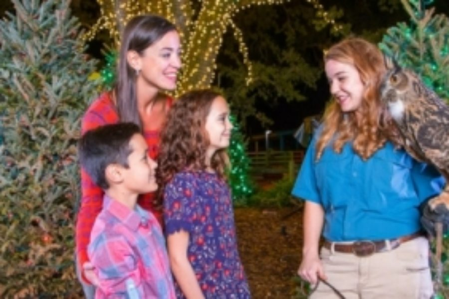 Tampa's Lowry Park Zoo – Christmas In The Wild