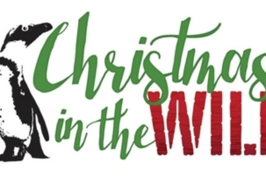 Christmas in the Wild at Lowry Park Zoo