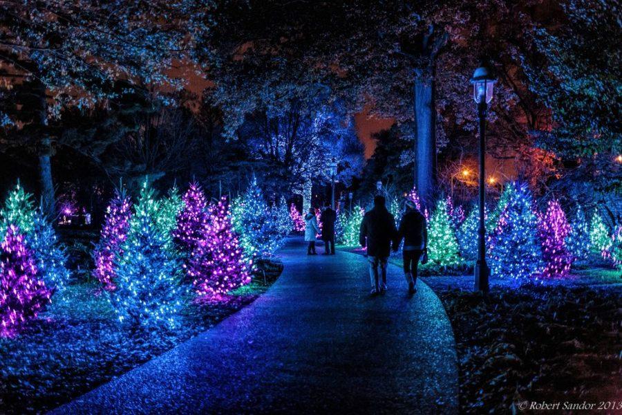Garden Glow at Missouri Botanical Garden